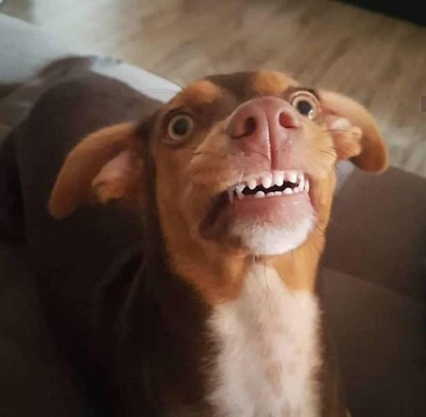 Dog Steals Grandma's Dentures
