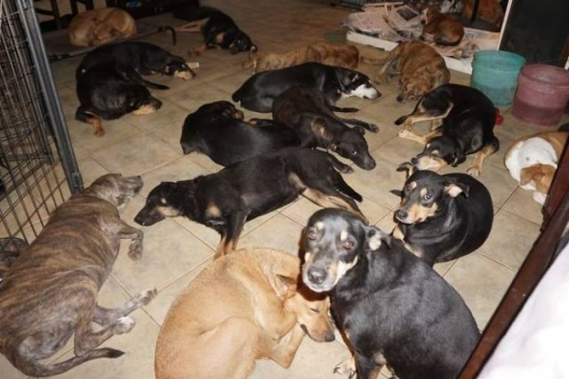 Rescued Dogs During The Hurricane Over The Bahamas