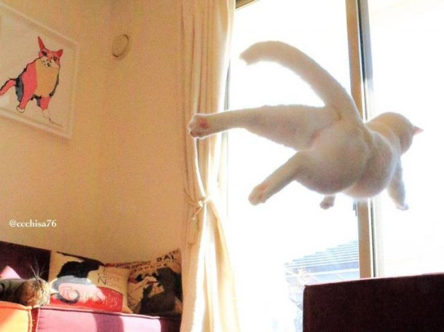 Perfectly Timed Photos, part 13