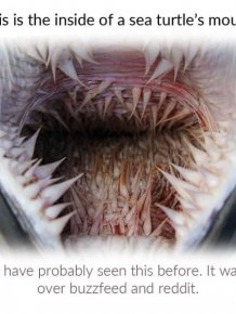 Why Sea Turtles Have Such Awful-Looking Mouths