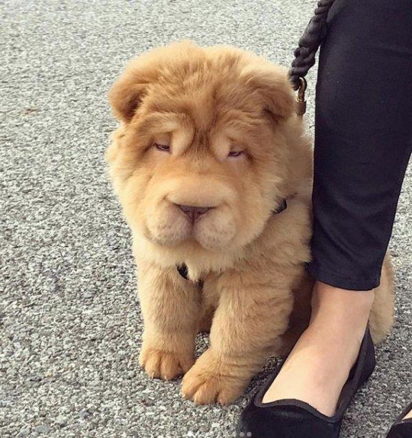 Beautiful Dog Breeds