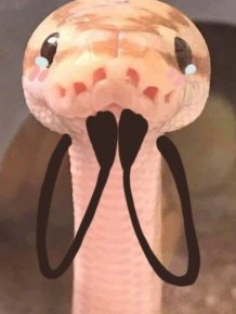 Snakes With Arms Are Hilarious