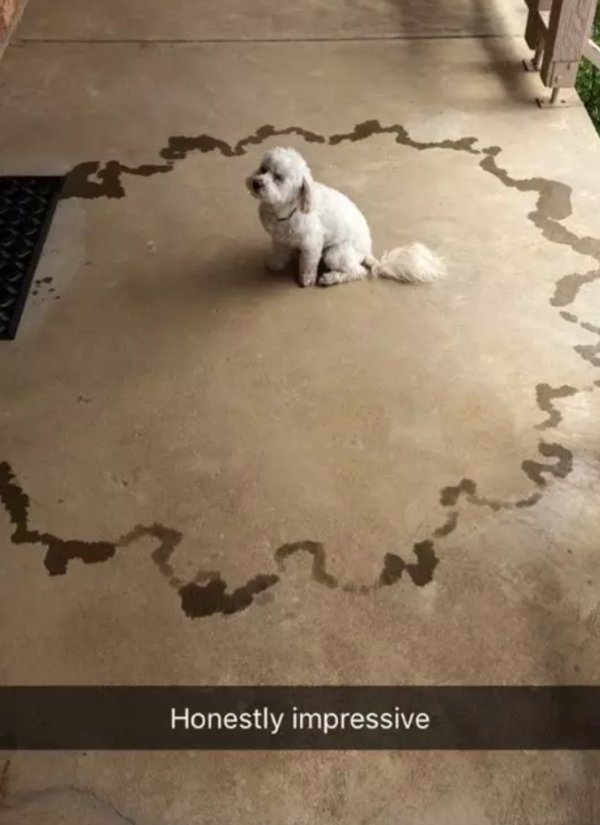 When You Leave Your Pet Alone