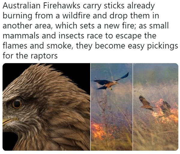 Welcome To Australia, part 7