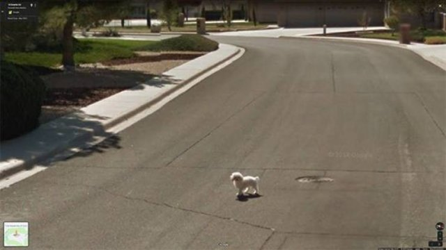 Interesting Things Found On Google Maps