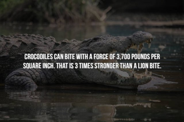 Scary Animal Facts, part 2