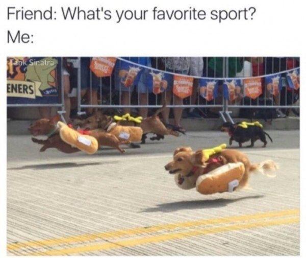 Hot Dog Memes