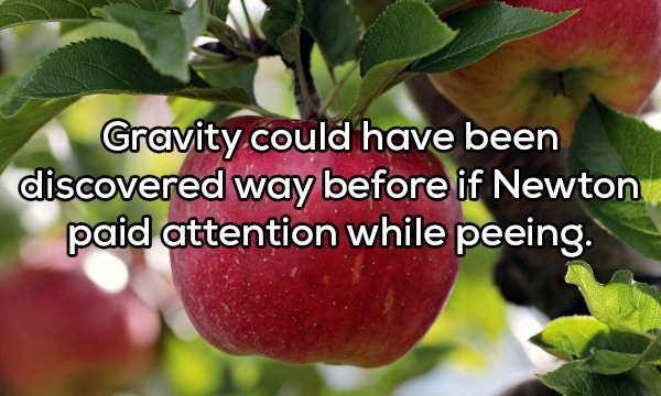 Shower Thoughts, part 91