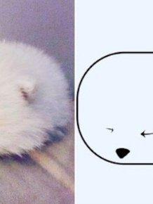 Hilarious Poorly-drawn Animals