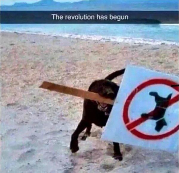 Dog Memes, part 4