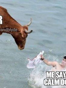 Random Funny Pictures