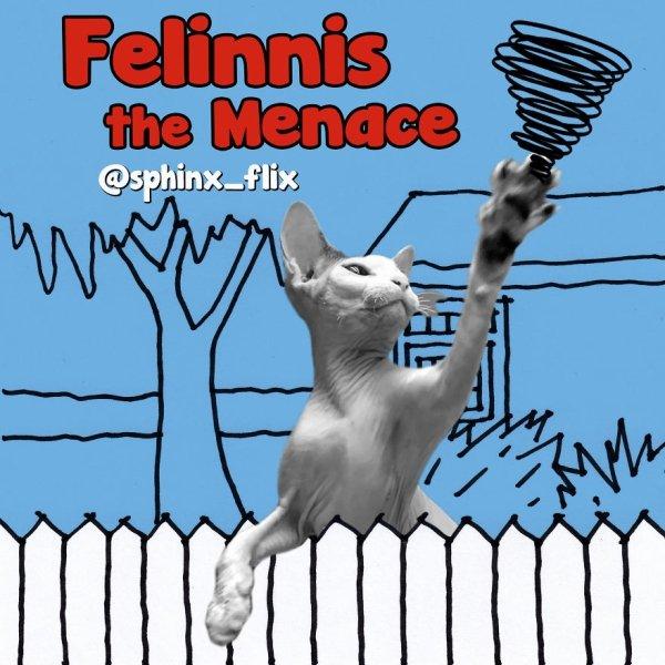 Cat Parodies Of Famous Films