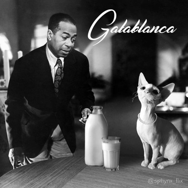 Cat Parodies Of Famous Films