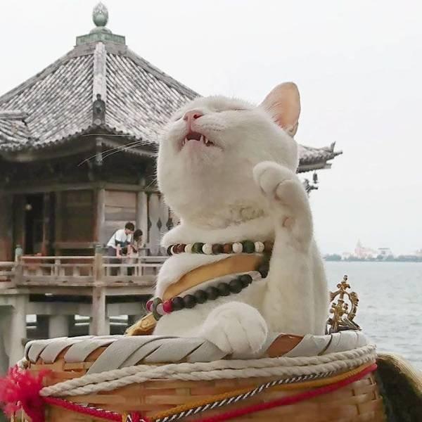 Cat Shrine In Japan