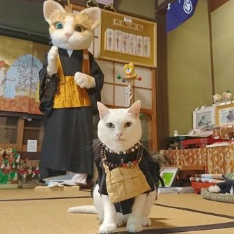 Cat Shrine In Japan
