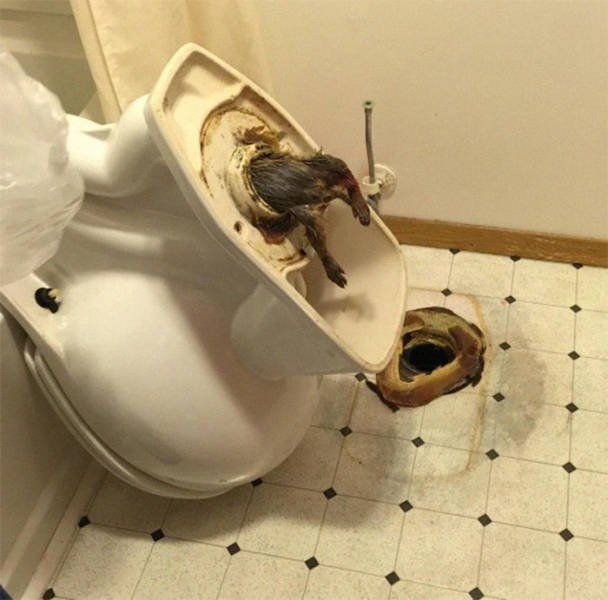 It's Not Easy To Be A Plumber