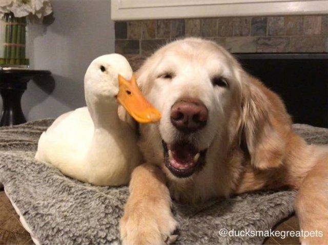 True Friendship, part 2