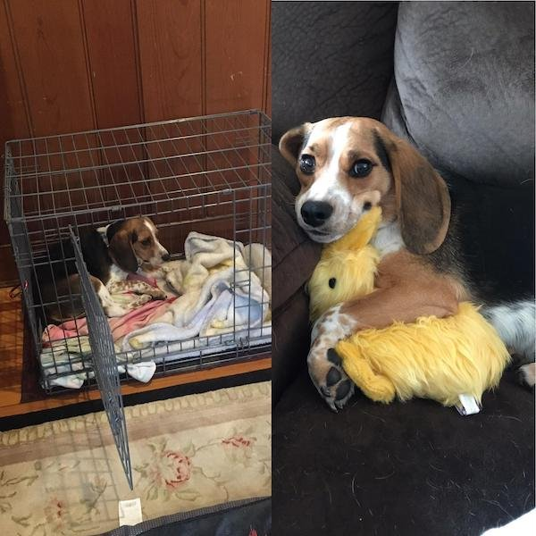 Photos Of Dogs Before & After Their Adoption