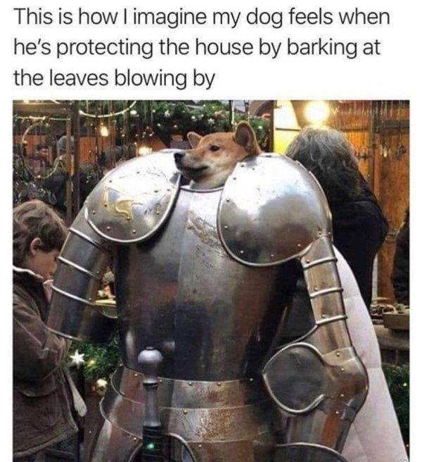 Dog Memes, part 5