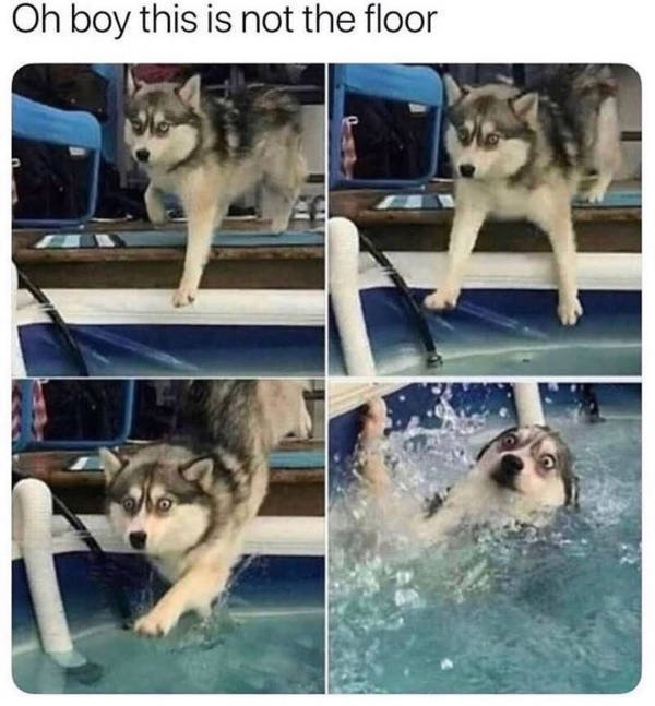 Dogs Memes