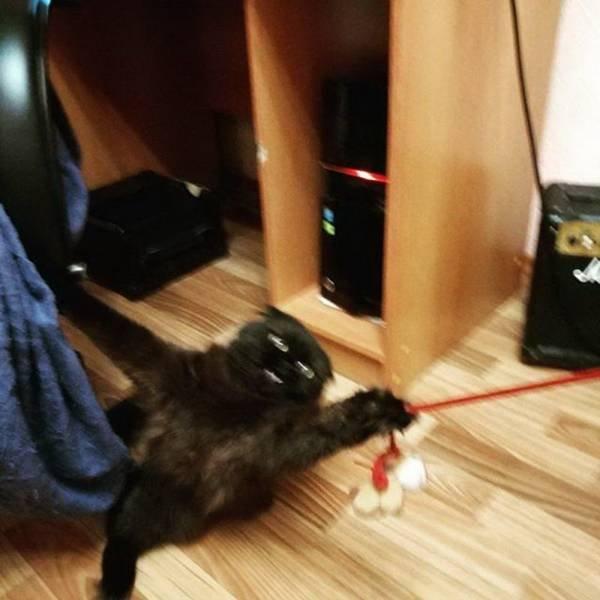 Funny Cats, part 9