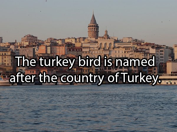 Facts About Turkeys