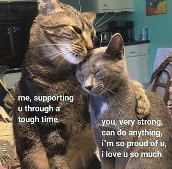Wholesome Memes, part 6