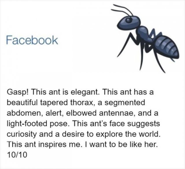 An Entomologist Rates Ant Emojis