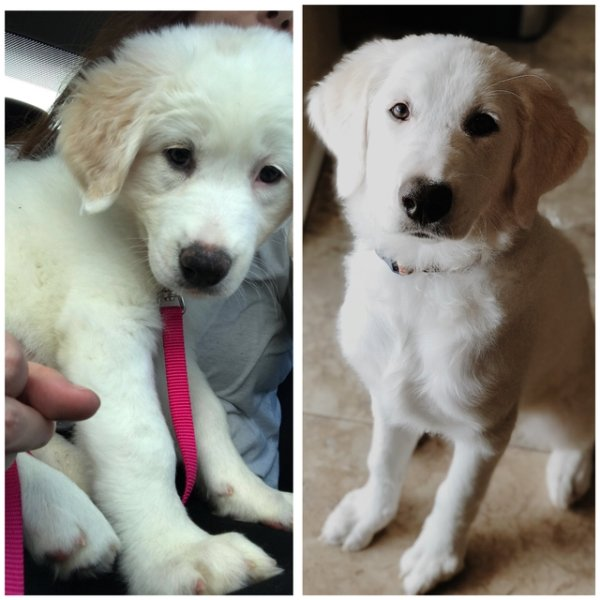 Photos Of Dogs Before & After Their Adoption, part 2