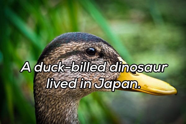 Interesting Facts, part 78