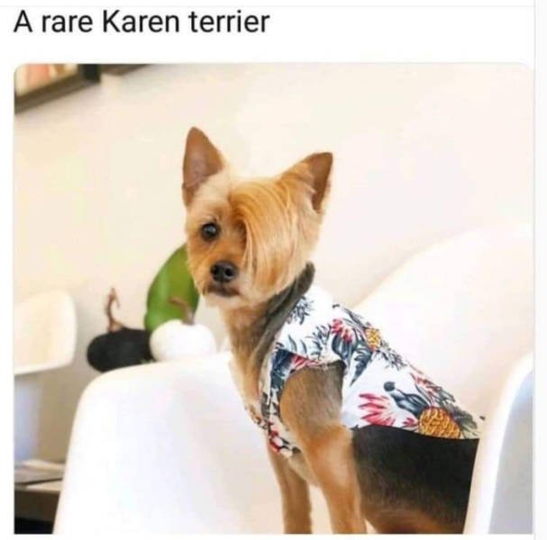 Karen & Manager Memes