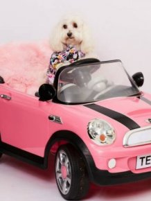 This Woman Spent A Small Fortune On Her Dog