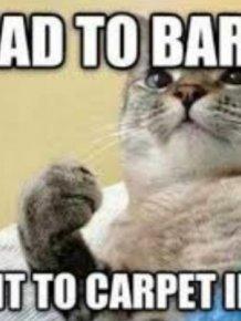 Memes About Pets