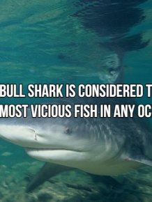 Interesting Facts About Most Dangerous Animals In The World