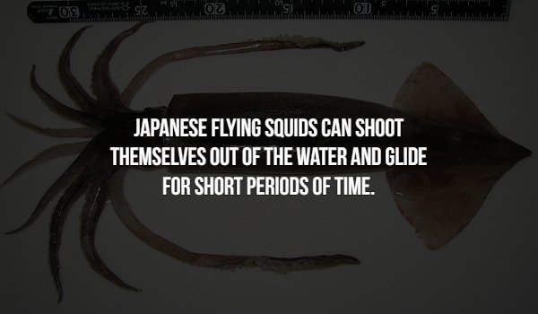 Interesting Facts, part 79