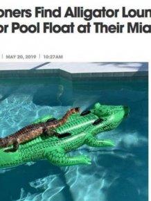 Crazy Florida