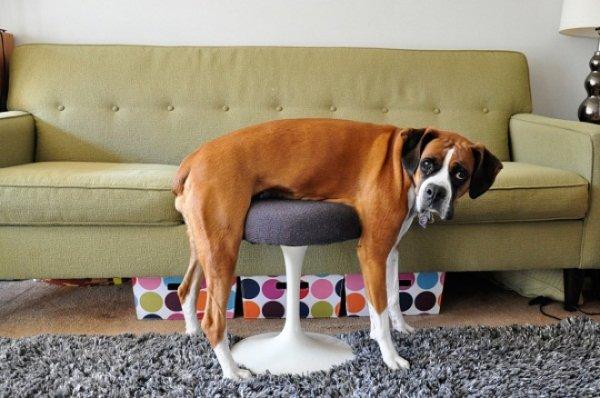 Hilarious Pet Fails