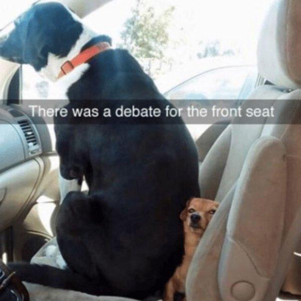Funny Dog Memes, part 3