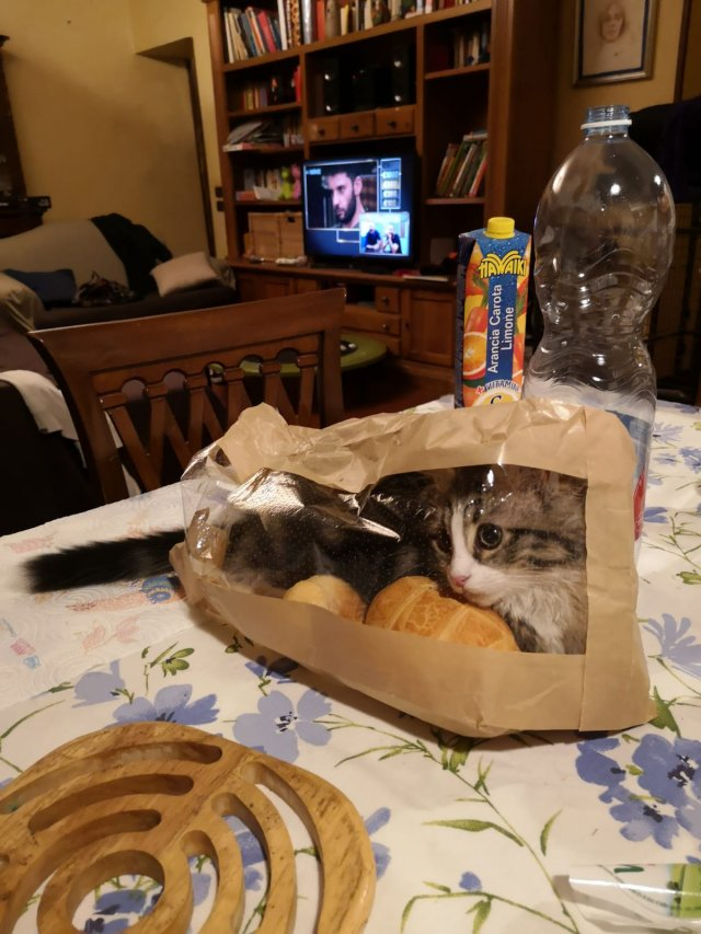 Funny Cats, part 10