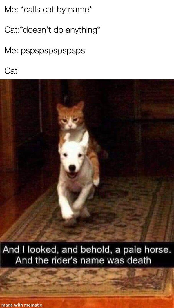 Ridiculous Memes