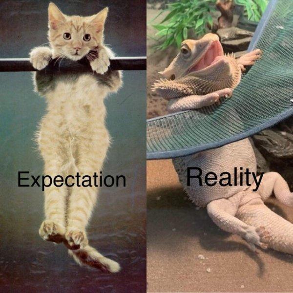 Expectations Vs. Reality, part 24