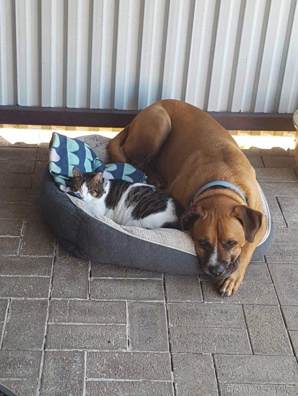 Unusual Animal Friendships