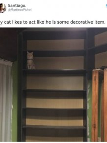 Tweets About Cats