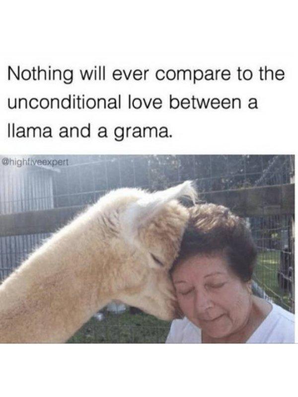 Funny Animals, part 63