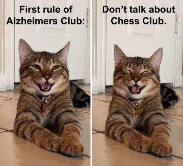Joking Cat