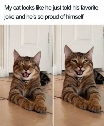 Joking Cat