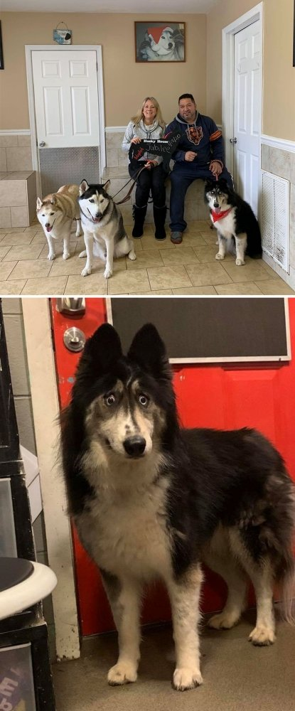 Cute Adopted Pets