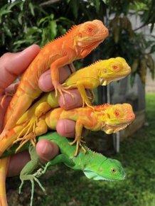 Beautiful Colors Of Nature