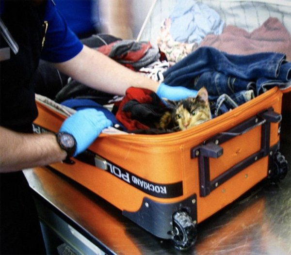 What TSA Confiscated From Passengers