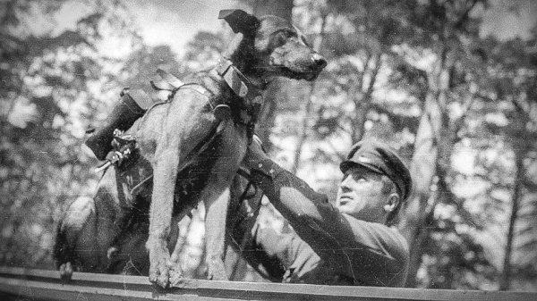 Brave Dogs Of WWI And WW2